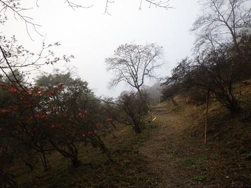 金尾山つつじ公園5