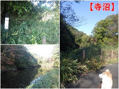 森林公園6寺沼