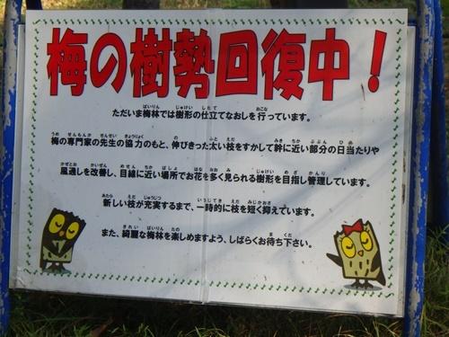 森林公園8梅林