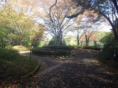 森林公園13