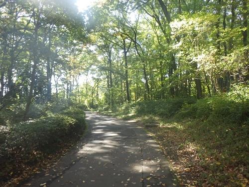 森林公園14