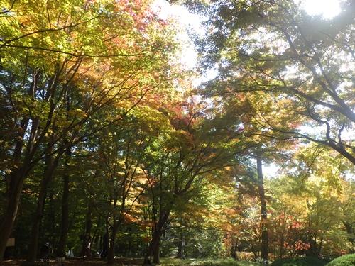 森林公園22中央口