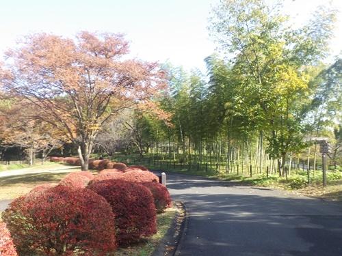 森林公園27
