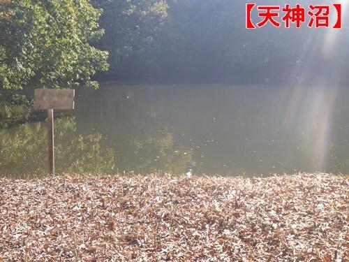 森林公園30