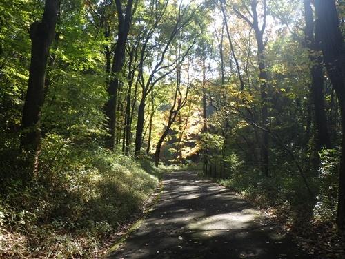 森林公園31