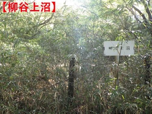 森林公園34