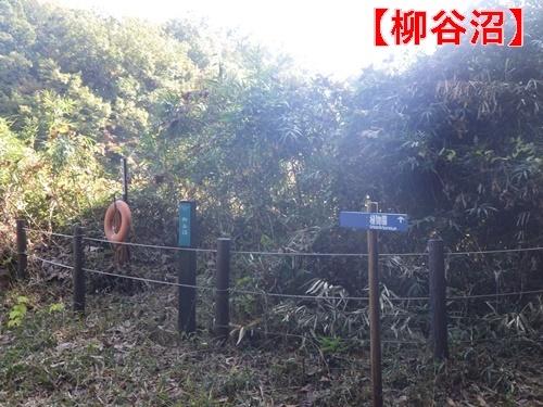 森林公園35