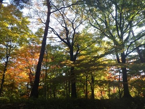 森林公園39戻り