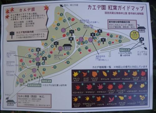 カエデ園マップ1