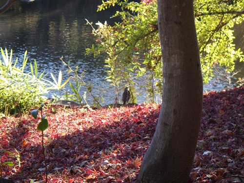 芸術の森公園7