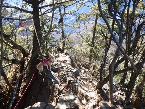 滝子山20