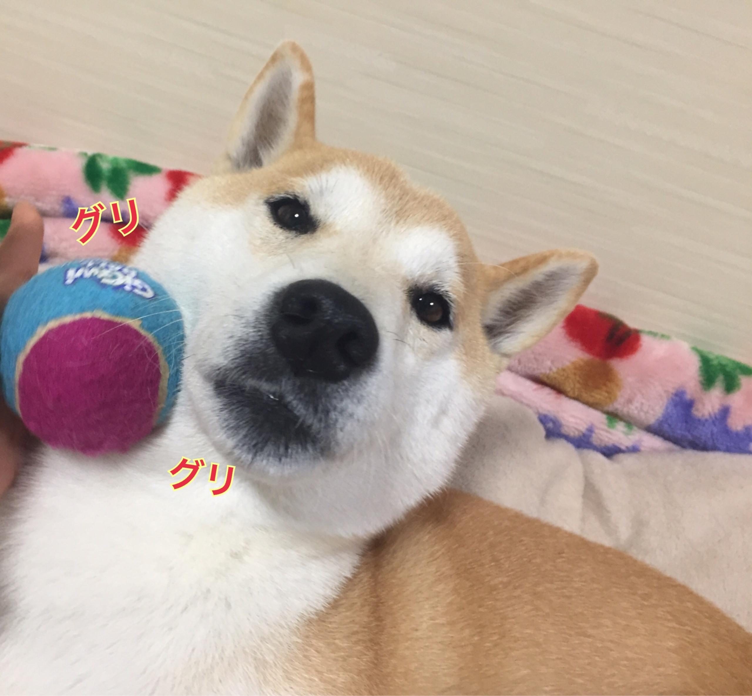 頭乗せチャレンジ!(ミニボール編)