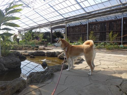 ハーブ庭園8