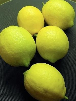 20170106自家栽培レモンお福分け