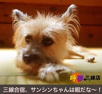 呼夢三線店 看板犬