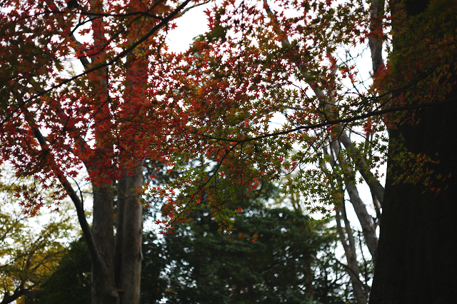Aporodagon5028と成田山と喜多院
