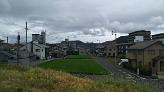 20190827野田池から(その5)