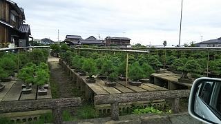 20160921晩夏景色(その1)