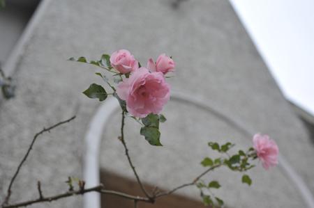 rosen20170106.jpg