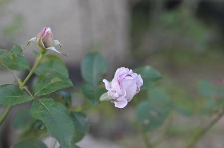 shinobu20161116.jpg