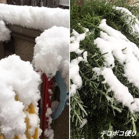 20161124 初雪10