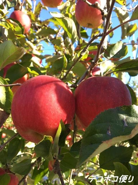 20161205 リンゴ2