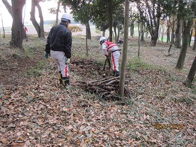 枯れ木の整理
