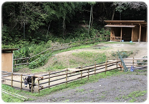sayomaru19-271.jpg