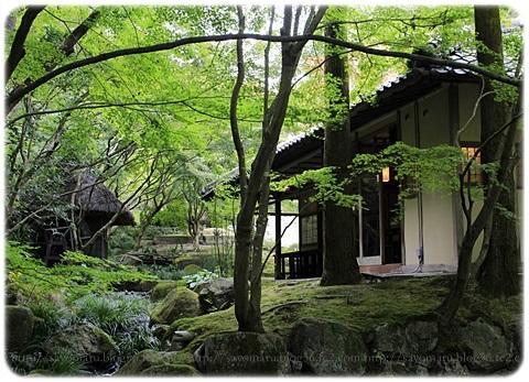 sayomaru19-305.jpg