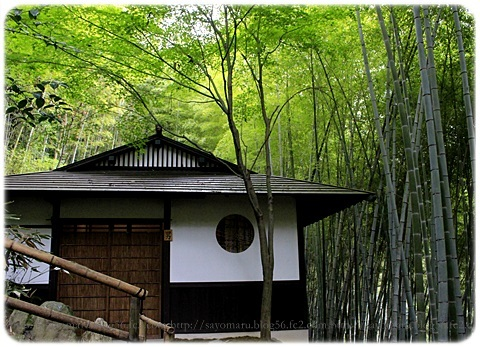 sayomaru19-323.jpg