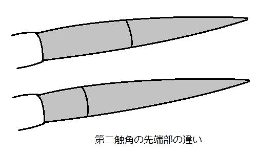 第二触角の先端