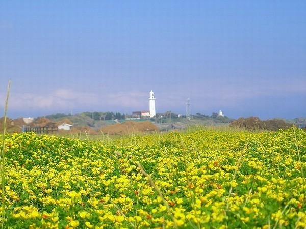 灯台(黄色い花)2_JALAN_121230