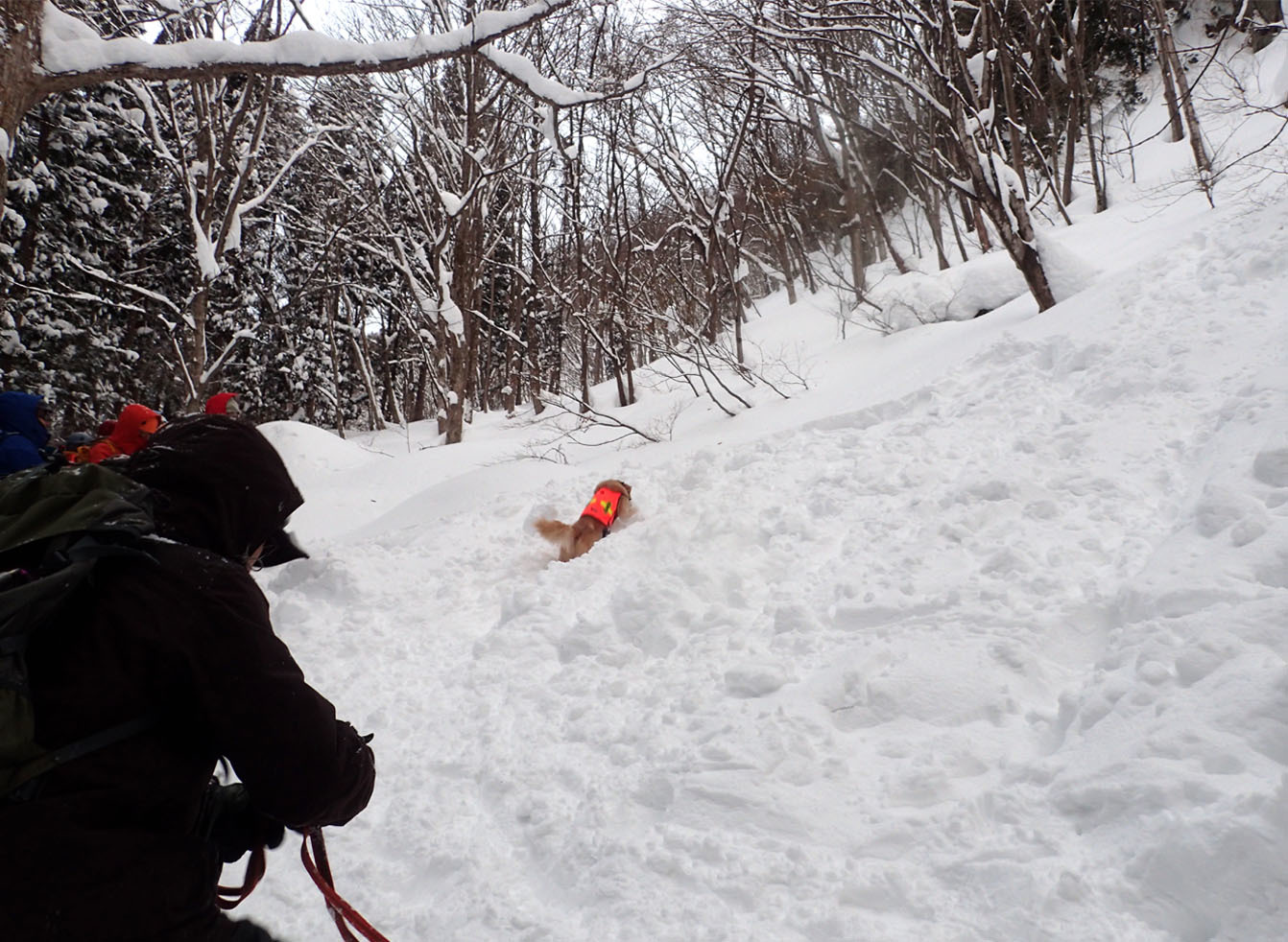 関東ブロック雪崩 初日(11)