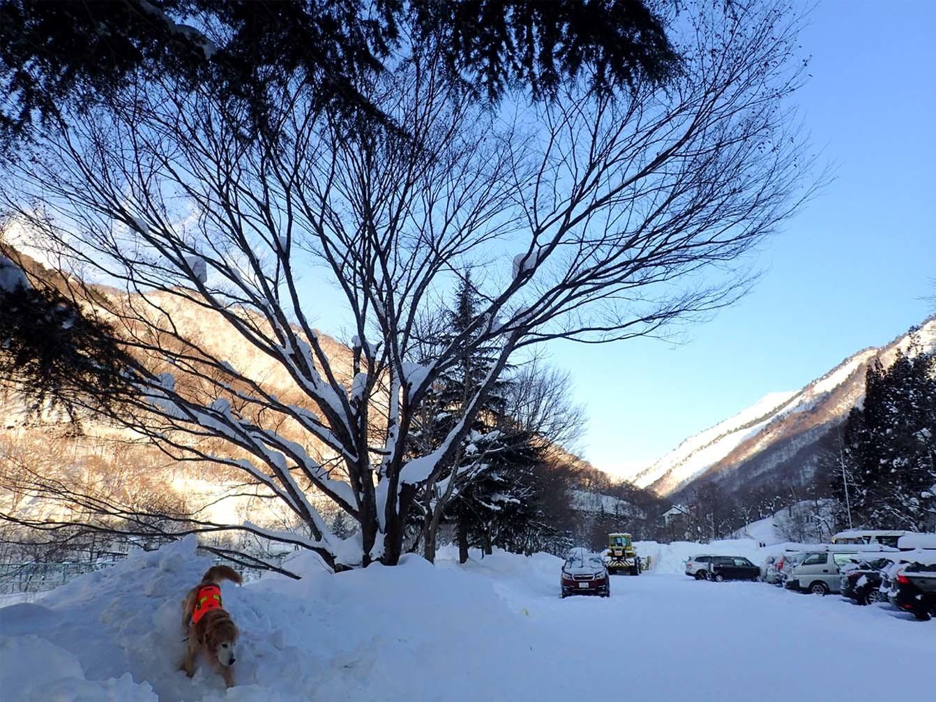 関東ブロック雪崩 2日目(2)