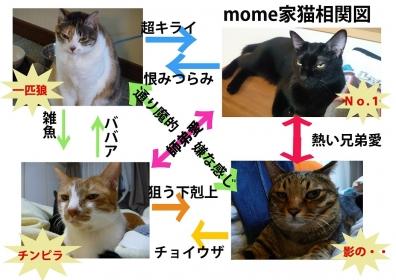 mome猫相関図s