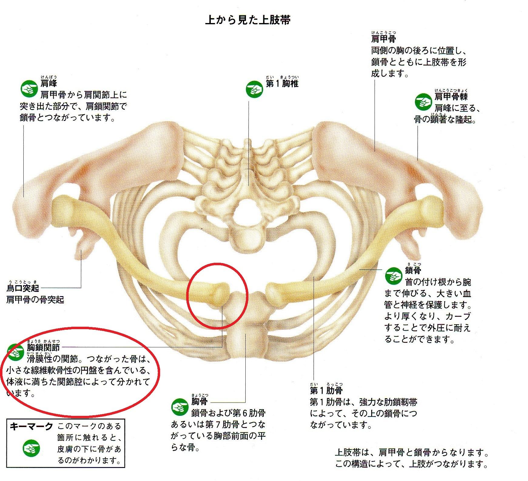 痛い 乳 突筋 胸 鎖