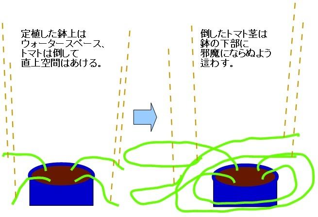 tomato_hati.jpg