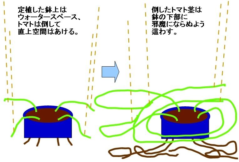 tomato_hati2.jpg