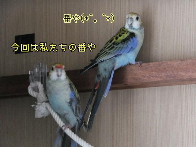 20161029175250666.jpg