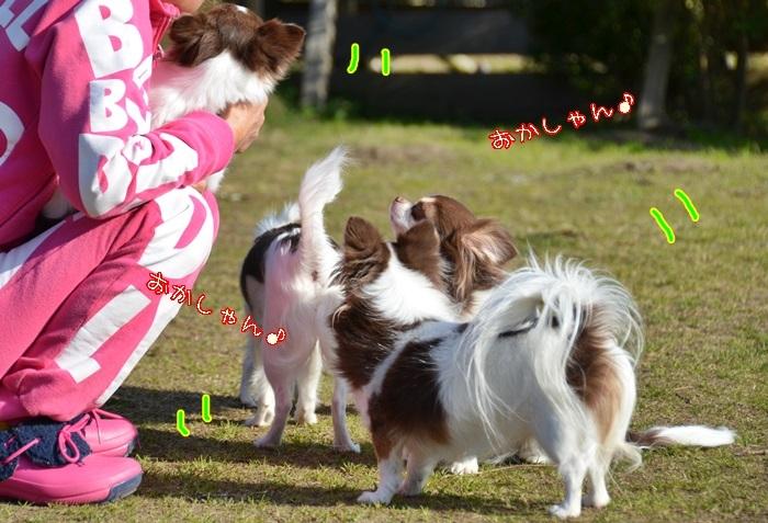 DSC_1608_2017012519582663f.jpg
