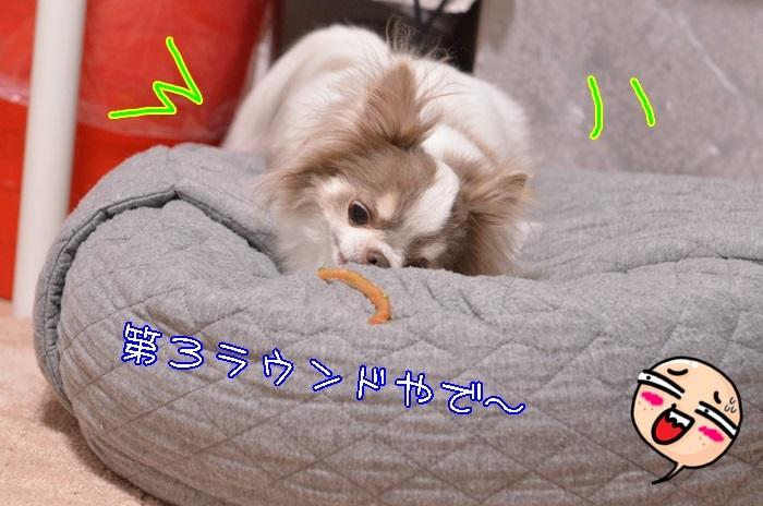 DSC_1743_20170209210810ef3.jpg