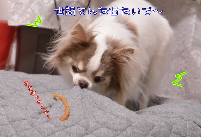 DSC_1749_20170209210813e88.jpg