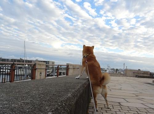 2海と空と柴犬と
