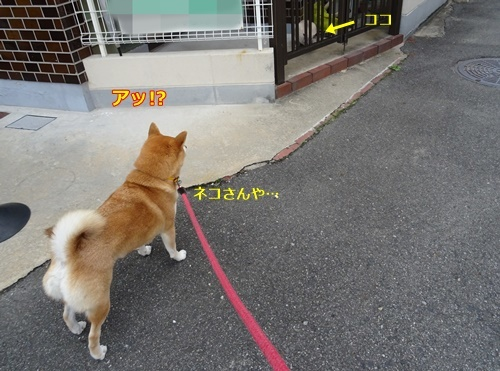 1ネコさん