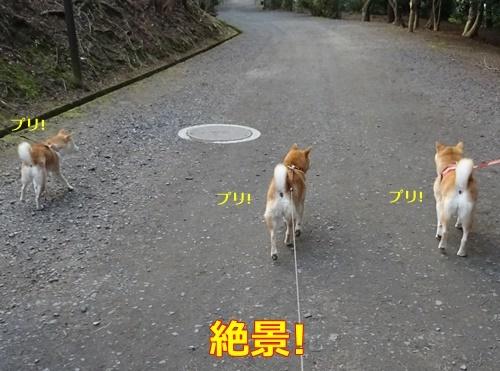 4柴犬女子3プリケツ