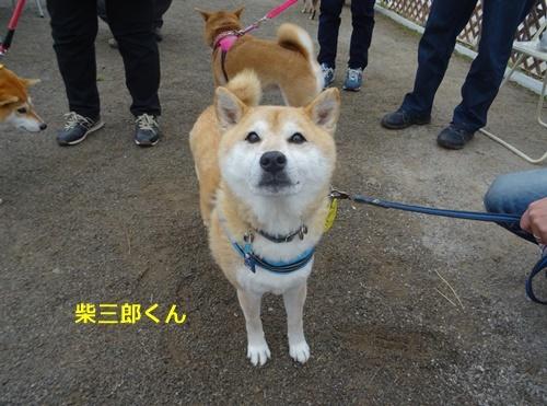 6柴三郎くん
