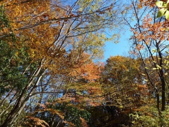 奥の院周辺の紅葉