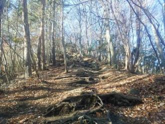 葉が落ちた登山道