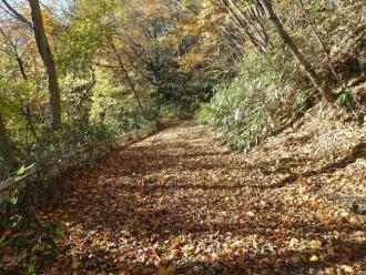 柳沢林道の落ち葉