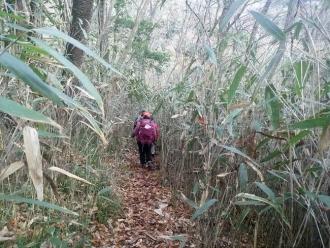 笹やぶの登山道